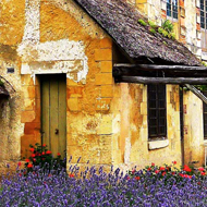 Lavendar against old cottage in Versailles by Carol Sunderwirth