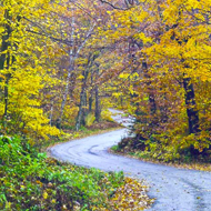 Winding Road in Fall by Carol Sunderwirth