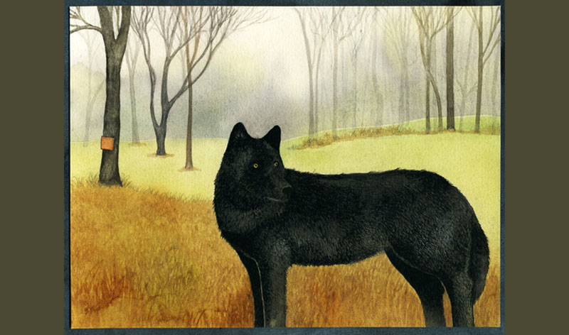 Johanna_Husband-Blackwolf-fp.jpg